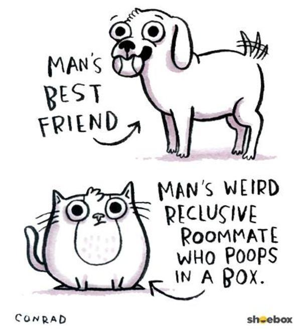 Cats or dogs? I like both. - meme