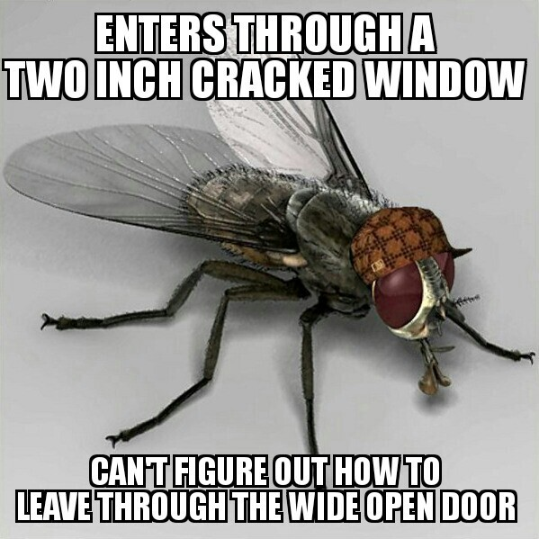 Fly y u do dis - meme