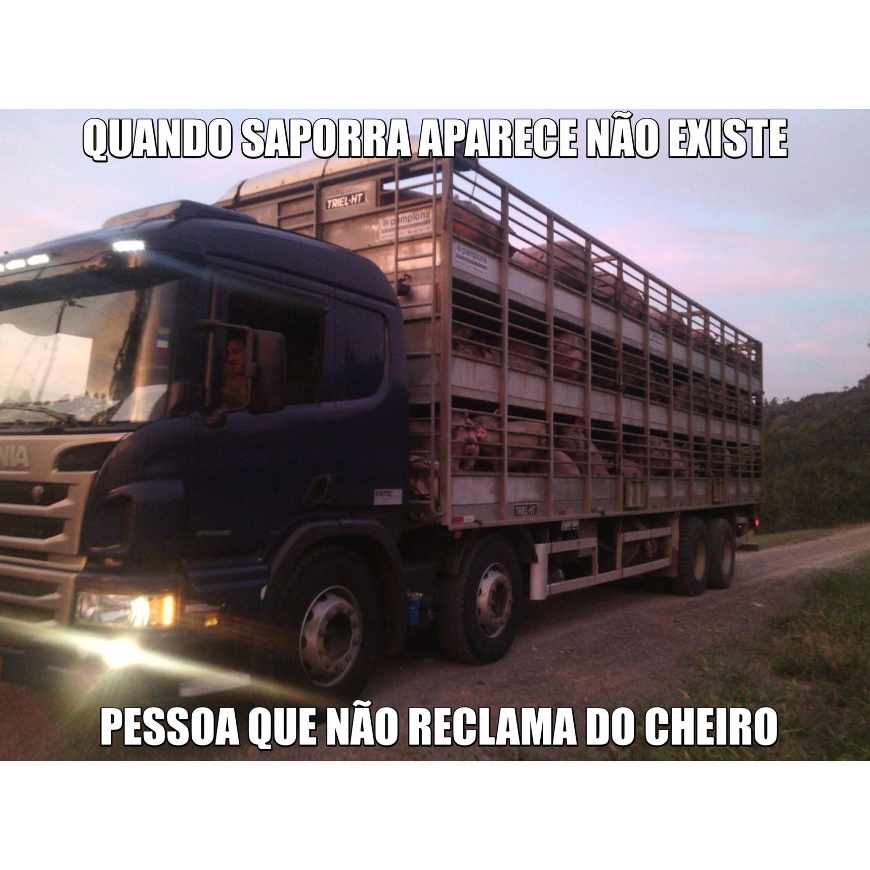 Meio de transporte da Peppa pig até o matadouro - meme