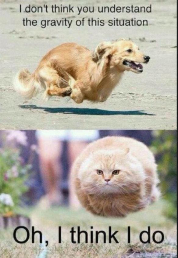 Gravity pets!! - meme