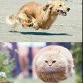 Gravity pets!!