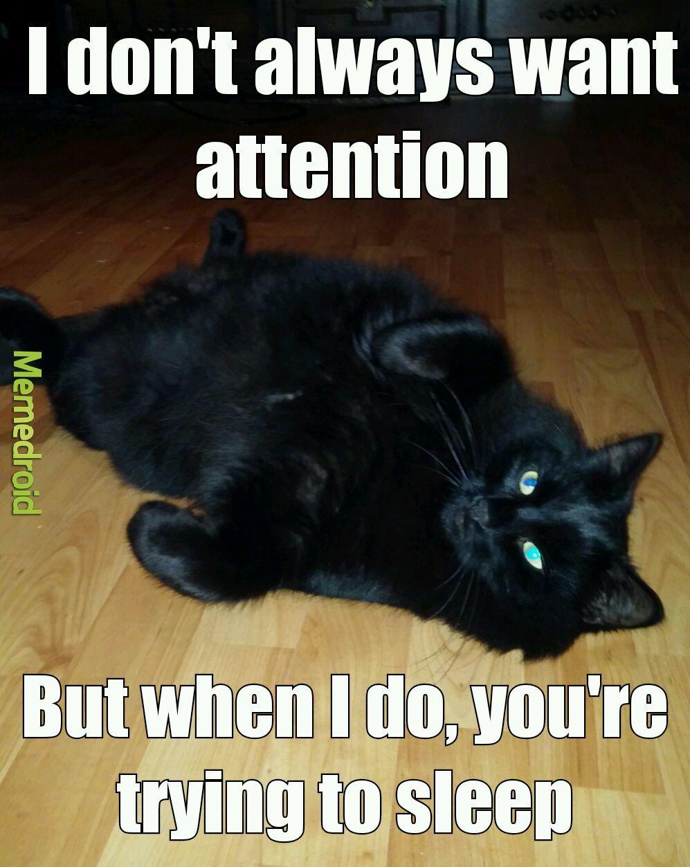 Cats... - meme