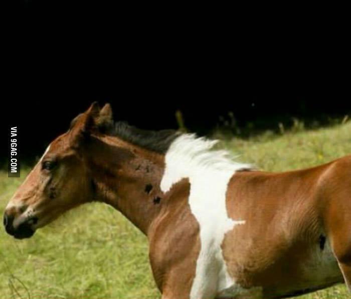 Combien y a t'il de chevaux ? Vous avez 2 heures - meme