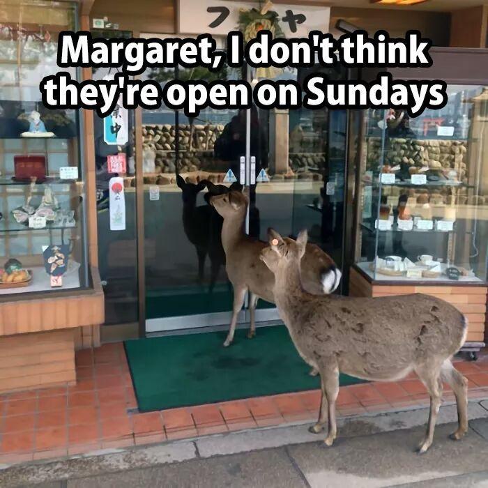 Oh deer - meme