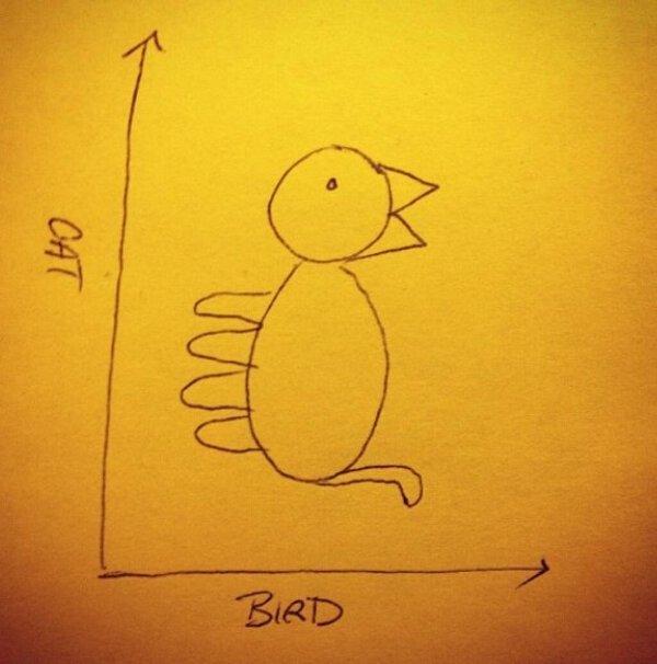 chat ou oiseau? - meme
