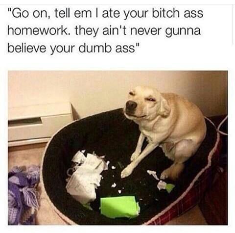 Dawgy - meme