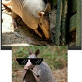 Armadillo's Rules