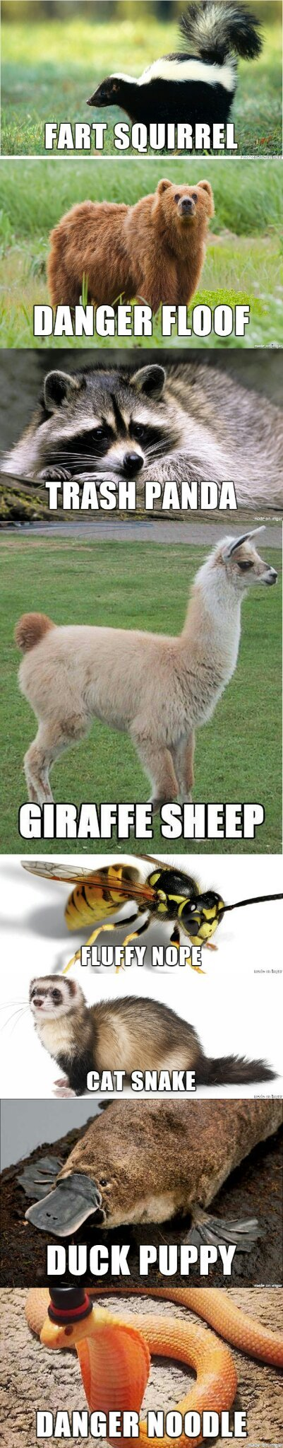 Real animal names - meme