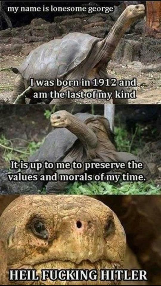 Das ist mein schildkröte.                    fgt - meme