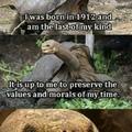 Das ist mein schildkröte.                    fgt