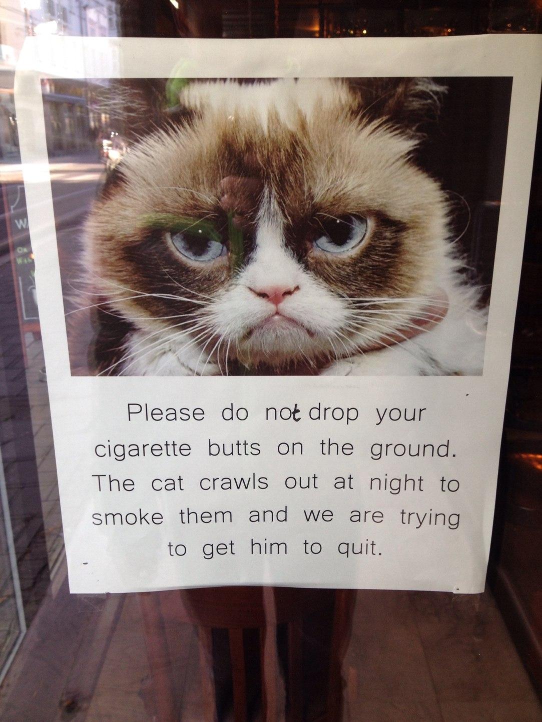 angry kitty - meme