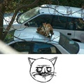 Suruba de gatos