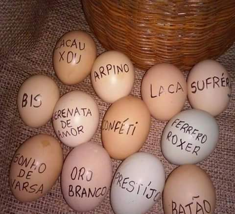 Feliz Páscoa a todos do mmd... - meme