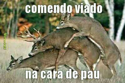 Orgia_de_traveco.mp3 - essa só os manjão pra pegar - meme