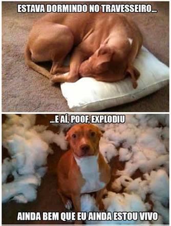 POOF! - meme