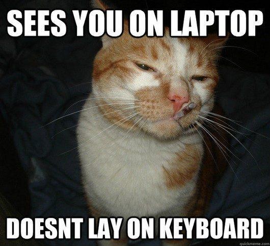 My kind of cat - meme