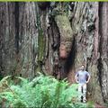 Cet arbre adore uranus (désolé ).