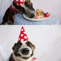 Quand tu donnes du gâteau au chien
