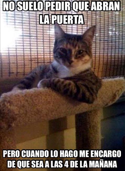Gato qlao - meme