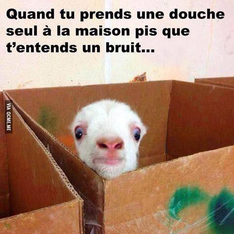 Dramatic chipmunk version chèvre  - meme