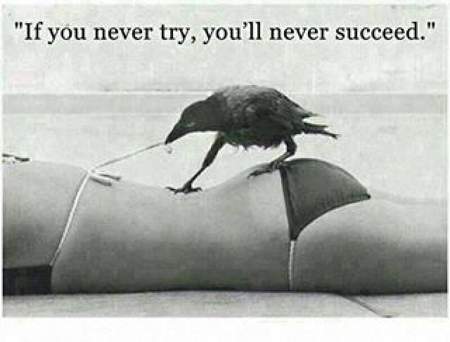 Damn crow - meme