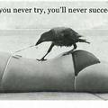 Damn crow