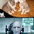 Cucciolo di cane senza naso, il tuo nuovo padrone ti aspetta...