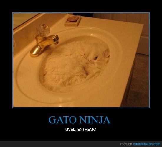 Gato Ninja - meme