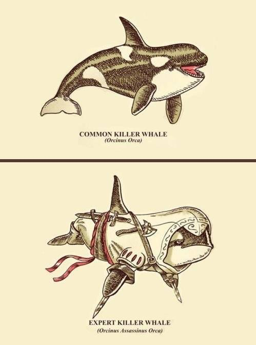2 types of whale - meme