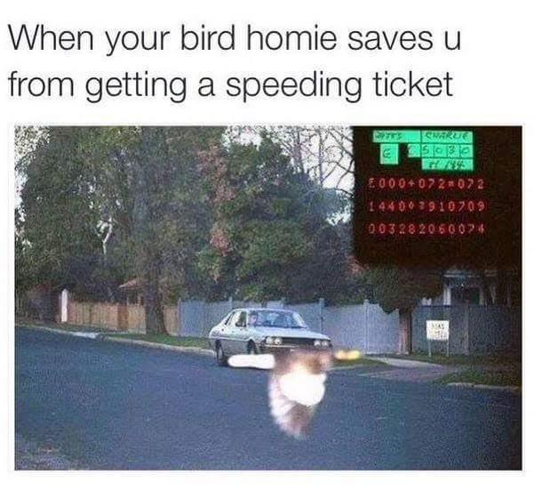 Thanks! - meme