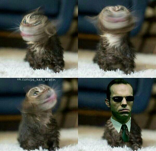 Un chat un peut trop humain XD - meme