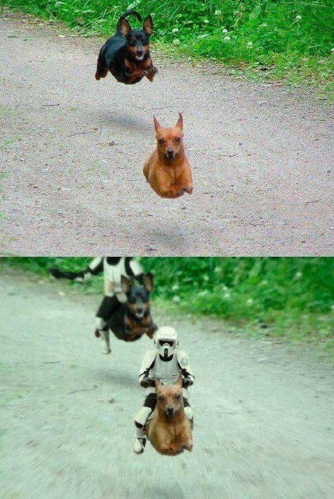 Battledog - meme