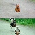 Battledog