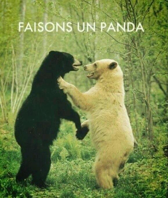 Pandas - meme
