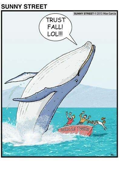 This is why i don't trust whales - meme