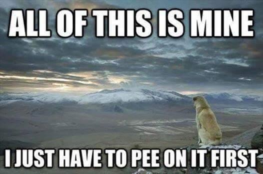 Dog logic - meme