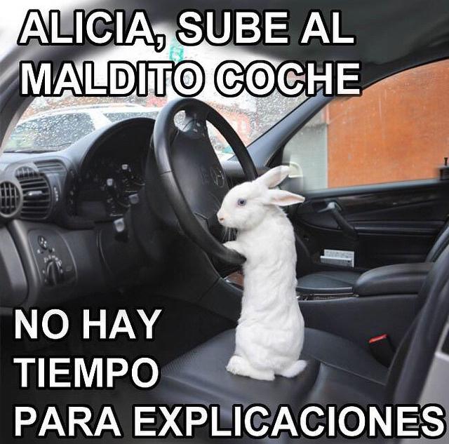 Ajajajajajajaajaa conejo de alicia va a llegar tarde :') - meme