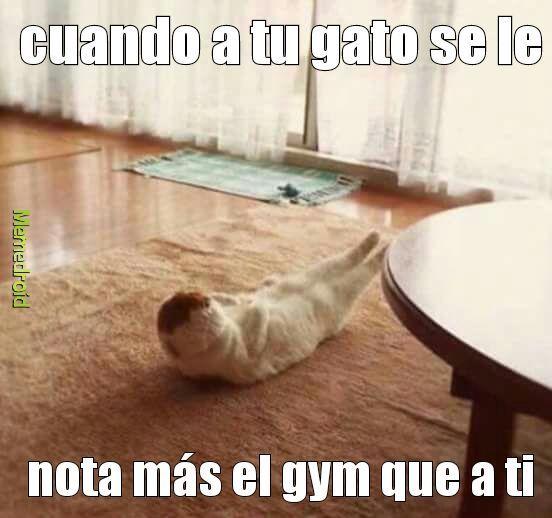 Mi gato está en el gimnasio - meme