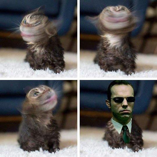 Omg - meme