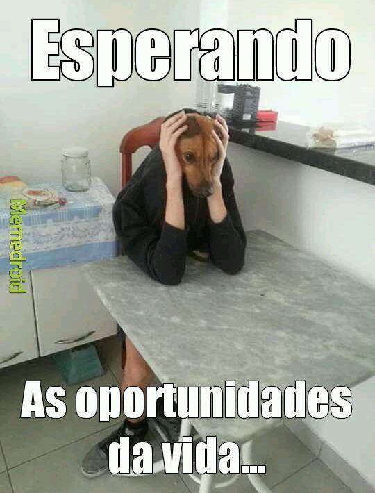 Quais oportunidades ? - meme