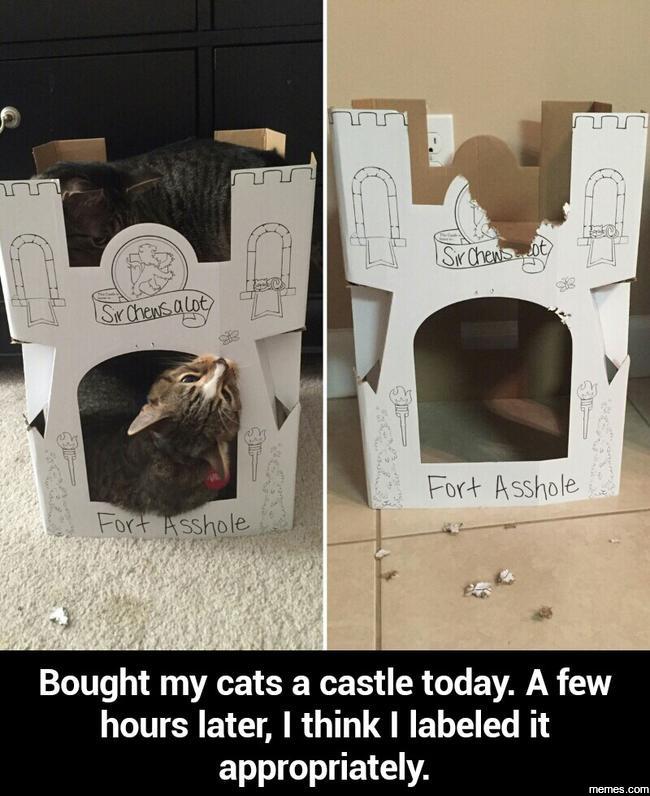 Cat... - meme