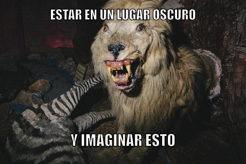 Ese es mi león - meme