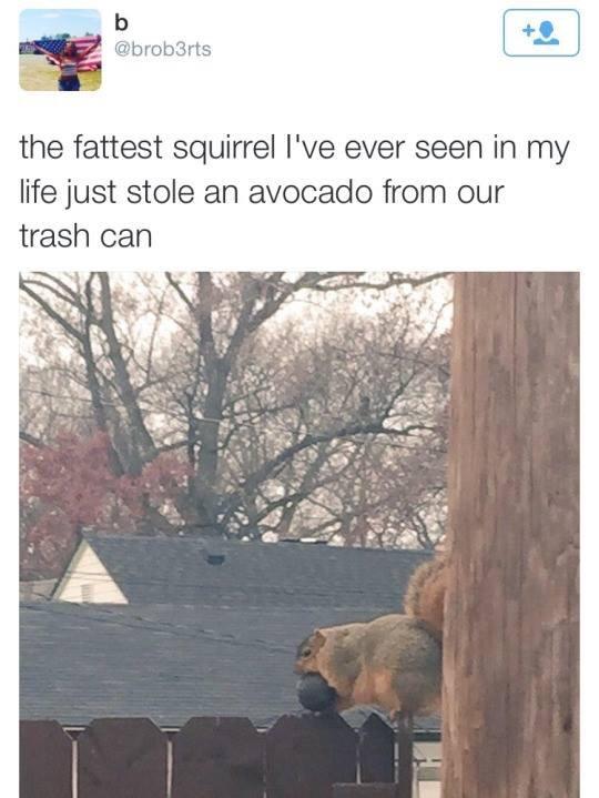 Title hates avocados - meme