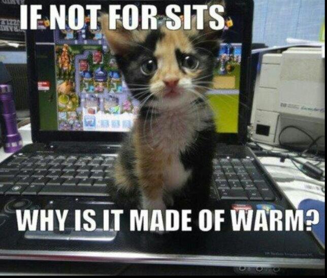 Cuteness Overload pt.2 - meme