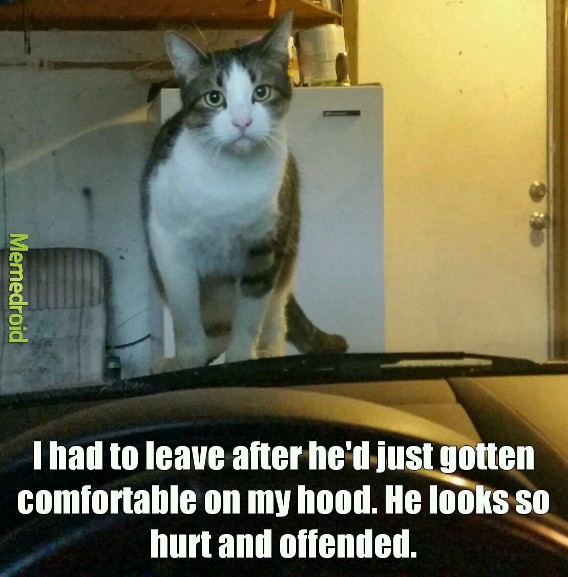 Poor kitty - meme