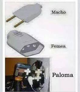 Paloma famosinha... - meme