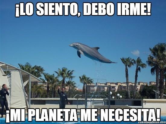 El título esta acompañando al delfín para salvar su planetas de las ballenas - meme