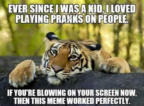 Tis but a scratch - meme