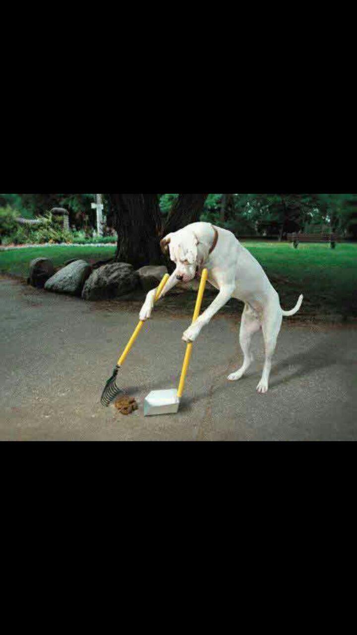Que perro mas aciado - meme