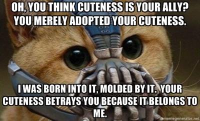 Bane kitty - meme